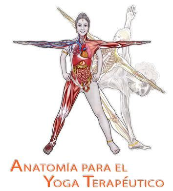 anatoma para vinyasa flow yoga terap 233 utico academy yoga teacher training program in online
