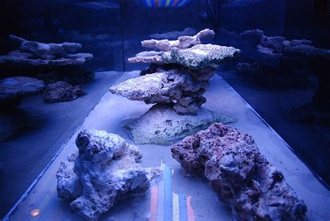 Aquascaping Reef by Aquascaping Show Your Skills Page 7 Reef Central Community