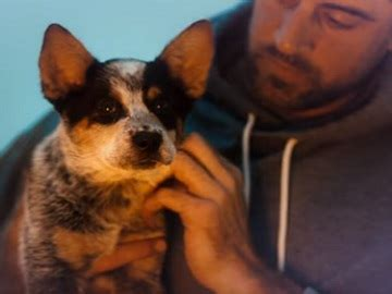 that has puppies commercial state farm commercial song aaron rodgers