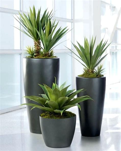 ceramic pots  indoor plants  india pots  large