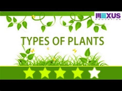 What Type Of Tree Is Used To Make Paper - biology learn about plants and their uses