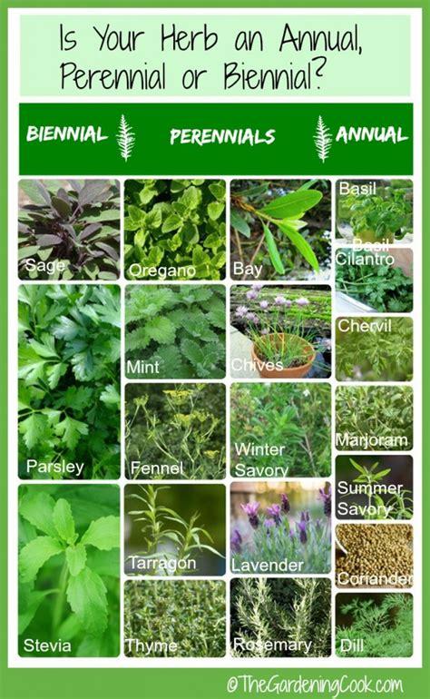 fresh herbs annual biennial  perennial