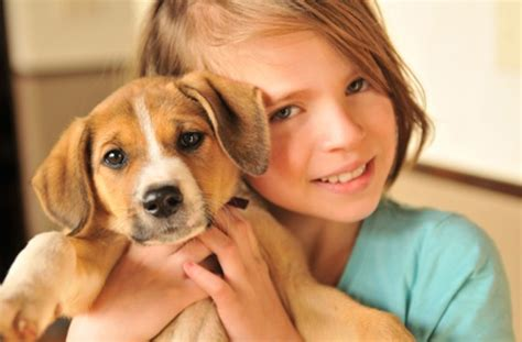 family puppy which pet s best for my family choose the right family pet dogs goodtoknow