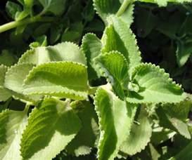 Herbal Plants Medicinal Plants Image Gallery Part 1