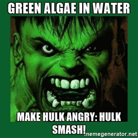 Hulk Smash Memes - green algae in water make hulk angry hulk smash hulk