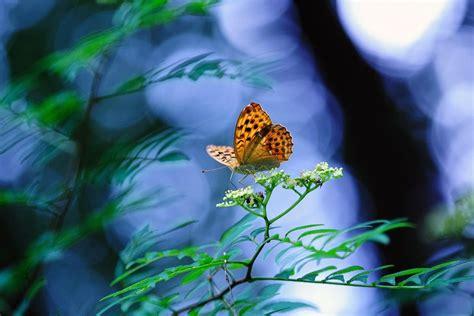 imagenes de mariposas hermosas 2 000 de las ms hermosas mariposas en el mundo banco