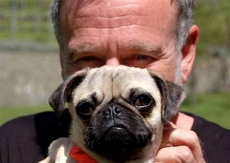 robin williams pug robin williams helped the la russa animal rescue foundation ecorazzi