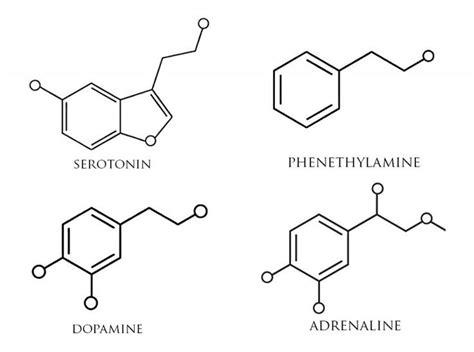 serotonin molecule tattoo best 25 dopamine ideas on serotonin