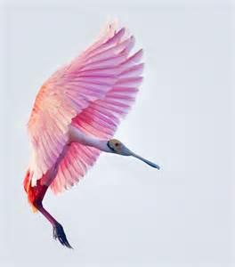 Flamingo Rug Color Inspiration Pink The Velvet Fantastic