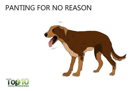 panting for no reason top 10 signs your may be stressed page 2 of 3 top 10 home remedies