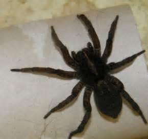 Missouri spiders identification for pinterest