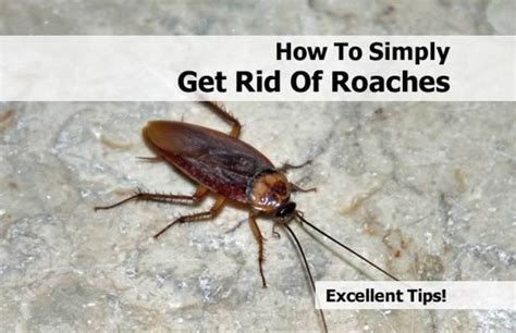 How To Get Rid Of Cockroaches Effective Methods That