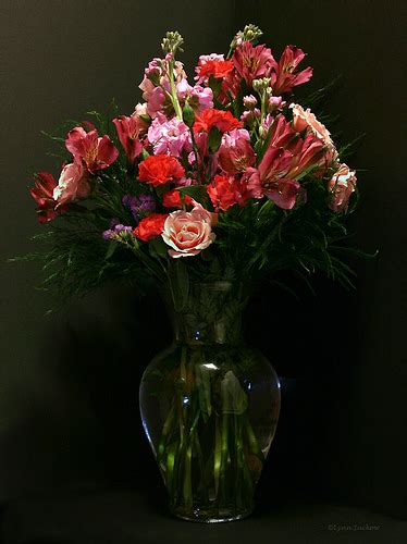 Sepatu Vans Polkadot Pink Acts aloha florist sacramento