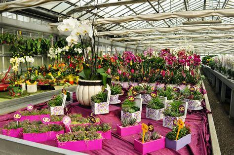 mercato fiori terlizzi agricola de palma s s mercato dei fiori terlizzi
