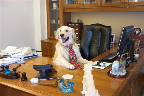 animali in ufficio animali pi 249 produttivit 224 e fiducia tra colleghi con il