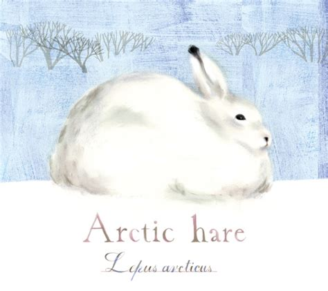 1000 Images About Arctic Animals - 1000 images about arctic theme on arctic