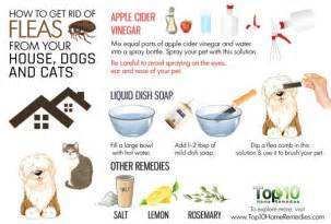 home remedy for fleas on dogs how to get rid of fleas from your house dogs and cats