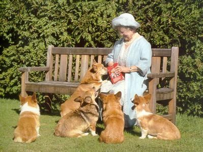 how many corgis does the queen have the queen and the corgis charlcie life goals pinterest