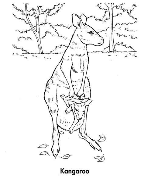 red kangaroo coloring page coloring pages of red kangaroos coloring pages
