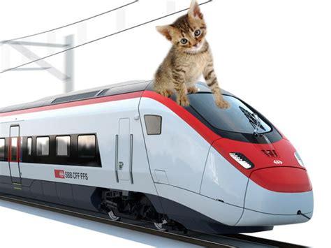 si possono portare i cani sul treno come viaggiare col gatto in treno