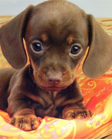 really puppies 25 best ideas about really puppies on