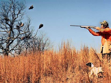 how to a to bird hunt how to buy a bird to hunt quail