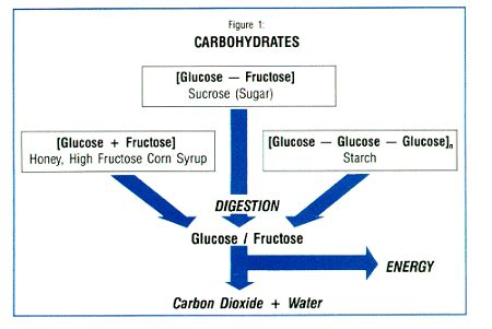 carbohydrates uses use of carbs