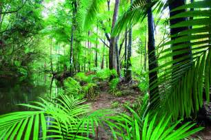 Tropical Rainforest Animals And Plants Adaptations - cairns attractions daintree rainforest tours attractions