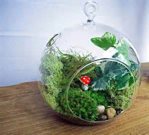 handblown glass orb moss terrarium kit by blithegardens on