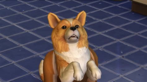 spa city puppies the sims 4 cats dogs gamesradar with grant rodiek sims community