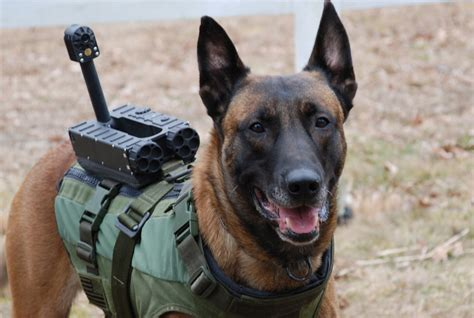 how to a k9 vest a archives