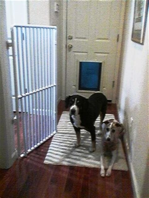 tall indoor pet gates   home  office rover