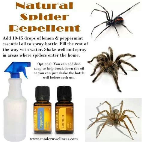does peppermint oil repel bed bugs best 25 natural spider repellant ideas on pinterest