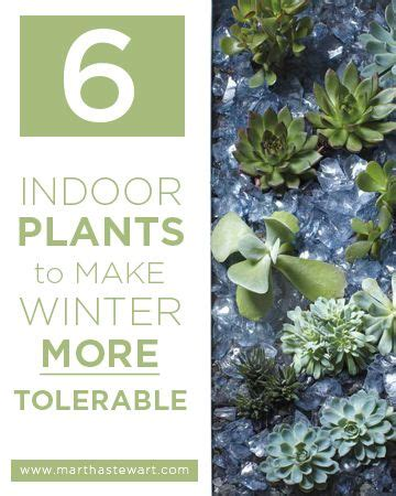 1000 images about gardening tips amp ideas on pinterest