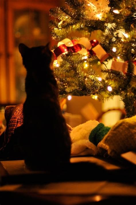 cat first seen christmas tree baby cats cats cats