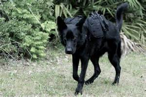 how to k9 dogs german shepherd backpack prepper style
