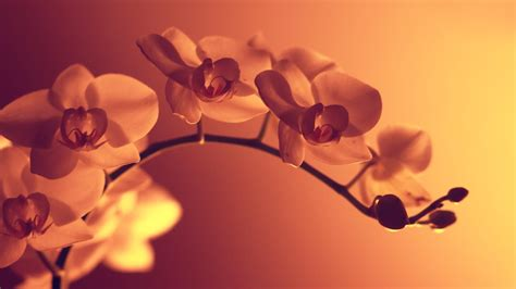 imagenes up hd 25 free hd flowers wallpapers