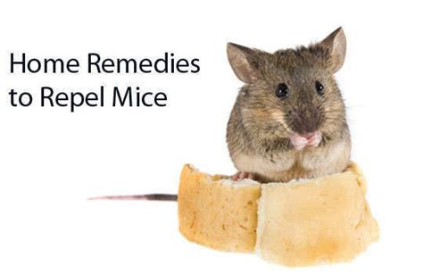 14 home remedies to repel mice wetellyouhowwetellyouhow