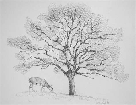 A Sketches Of Trees by Tree Sketch 2 By Cruciocurse On Deviantart