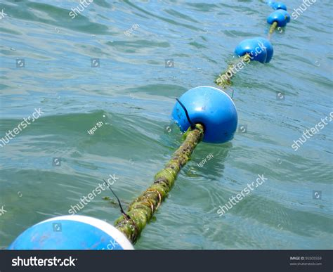 buoy boat barrier buoy rope barrier on water floats stock photo 95505559