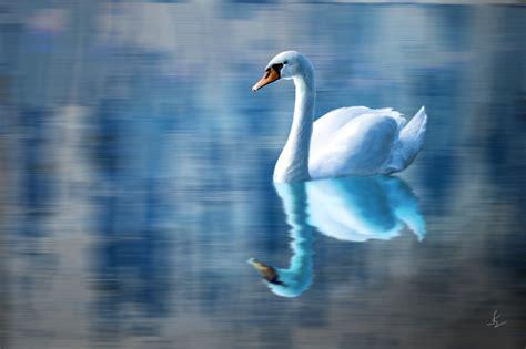 Bloues Swan Blue Swan By Xclarxcheex On Deviantart