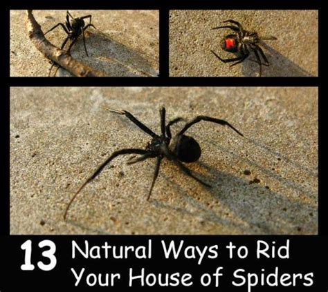 how to get rid of spiders from christmas tree 13 ways to rid your house of spiders home and gardening ideas