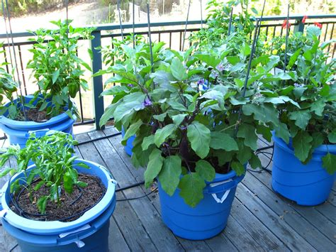 Vegetable Container Gardening Ideas Container Vegetable Gardening Www Imgkid The Image Kid Has It