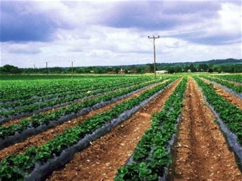 fewer registered ga. organic farms | georgia public