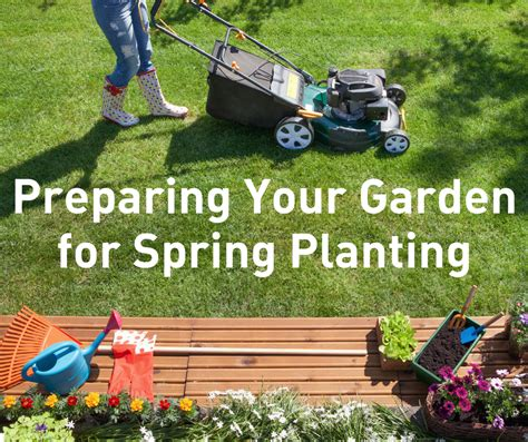 how to deal with lawn seed heads