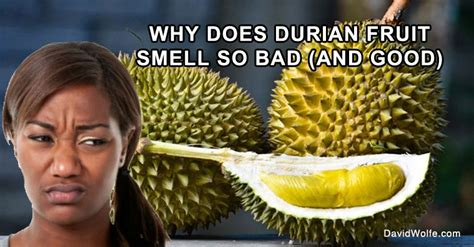 durian fruit davidwolfecom