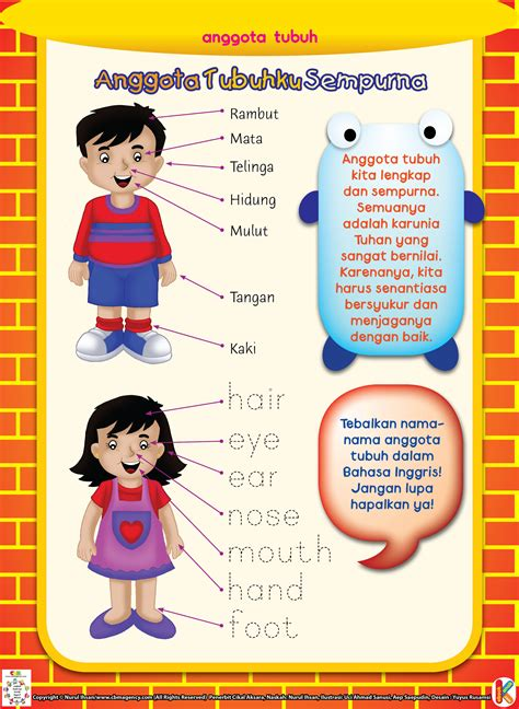Buku Anak Aktifitas Tk A B anggota tubuhku sempurna ebook anak