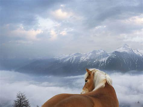 wallpaper for desktop of horses horse wallpapers hd horses wallpapers beautiful cool