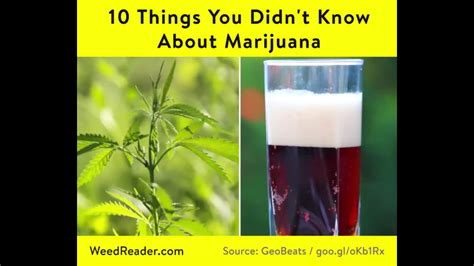 10 Things About Holzier You Didnt by 10 Things You Didn T About Marijuana Reader