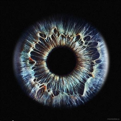 printable iris eyes 25 best ideas about iris eye on pinterest human eye